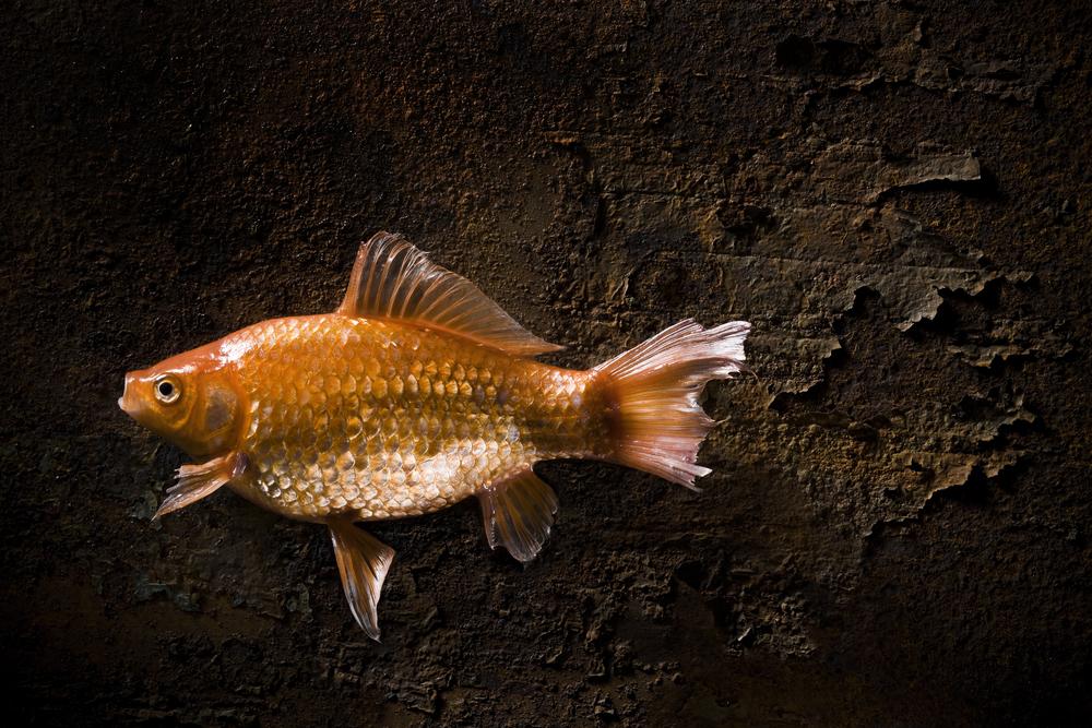 Fish3455.jpg