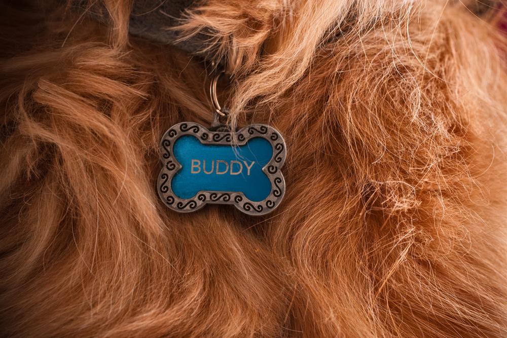 Buddy_X7B2139.jpg