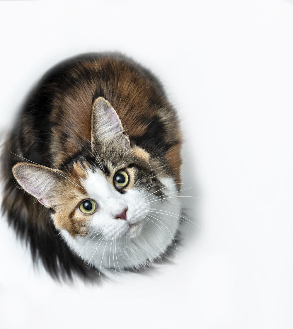 Cat11393_group.jpg