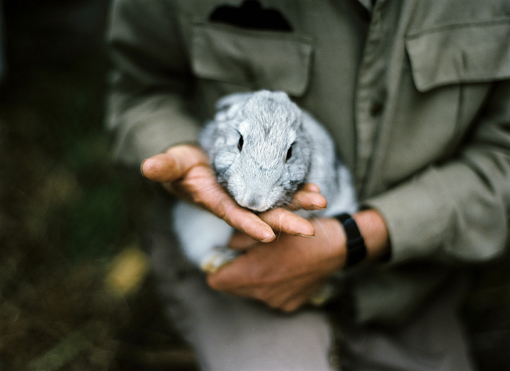 Holding Rabbit, 2009