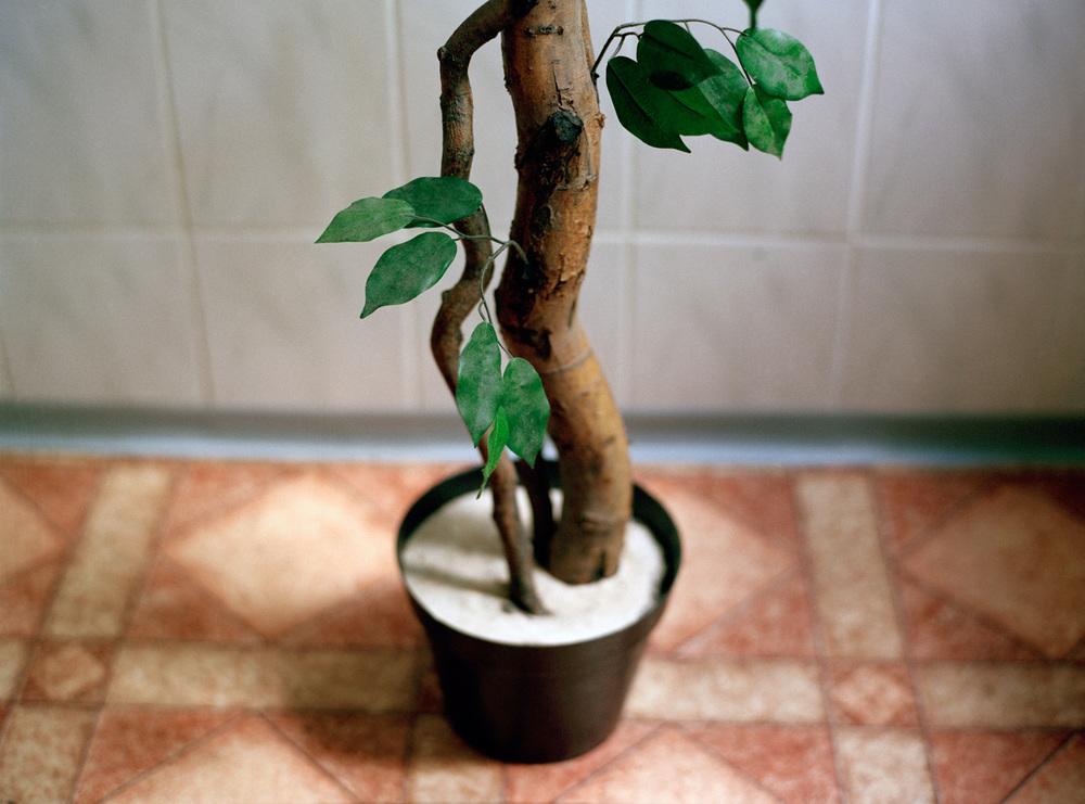 Fake Tree, 2008