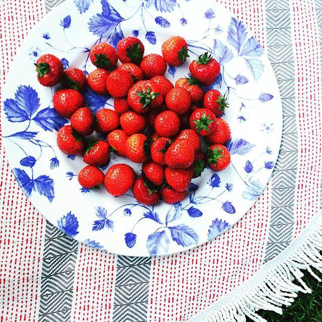 Simple Summer Picnics. #picnicblanket #foldingroom #roundtowel #handloomed #roundbeachtowel #roundpicnicblanket