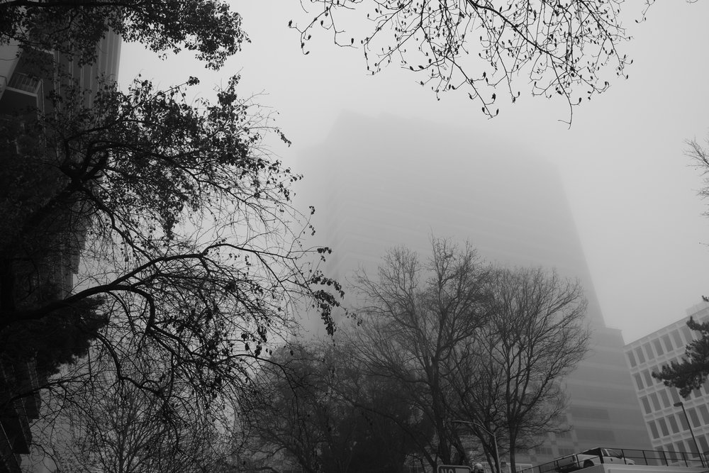 Fog Sac 2019 (12).JPG