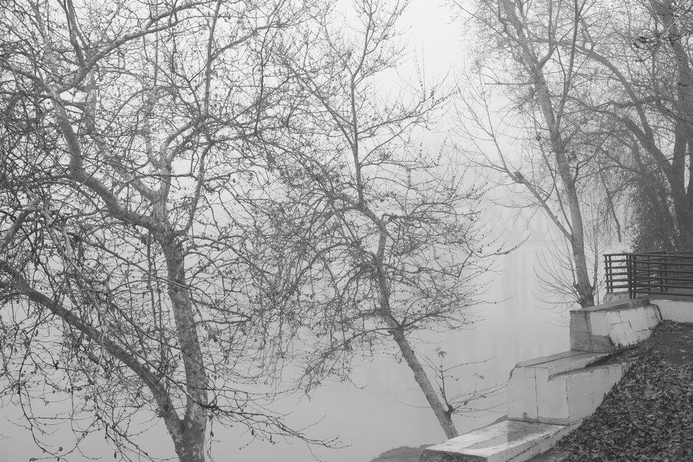 Fog Sac 2019 (21).JPG