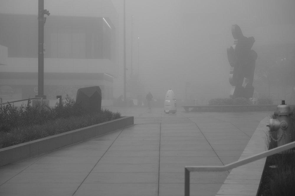 Fog Sac 2019 (5).JPG