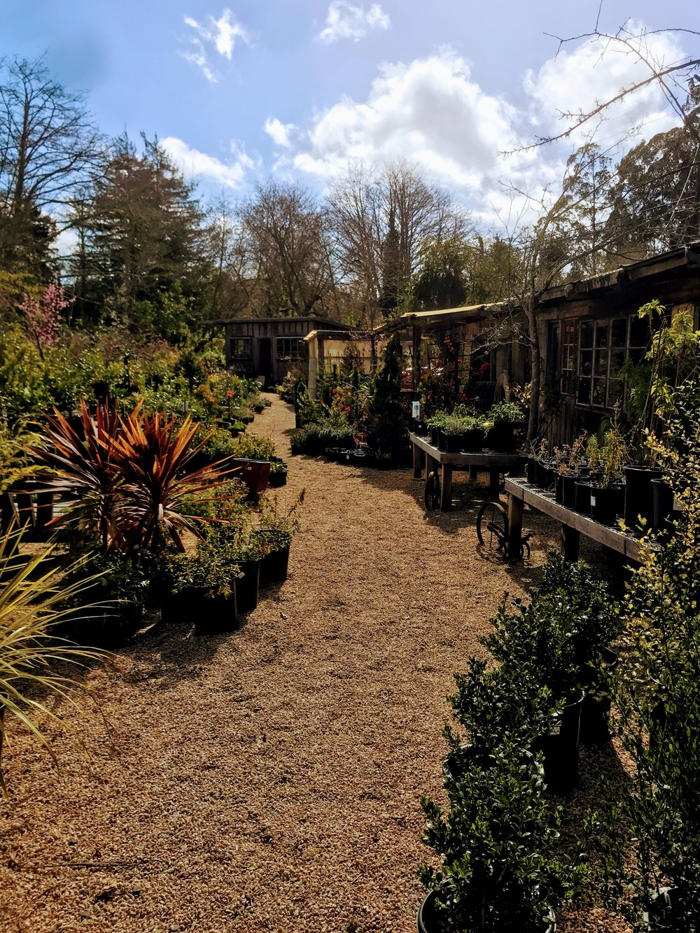 Las Bolinas Nursery: Chronic Illness Blog