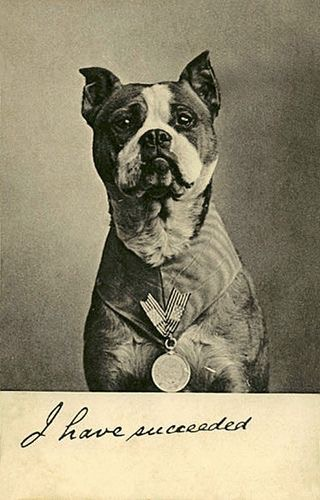 The Real Sgt. Stubby