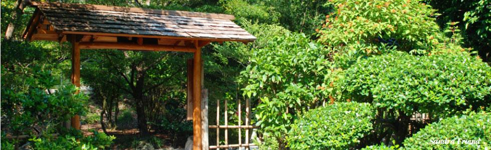 T'ai Chi Chih: A Gateway to Health