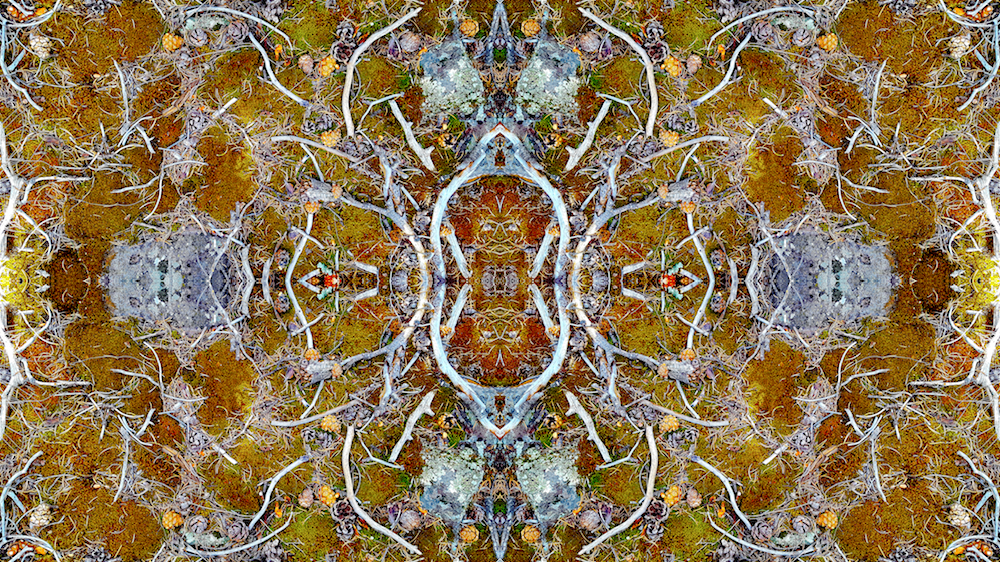 FOREST RUG 7A        © 2016 David Marlett
