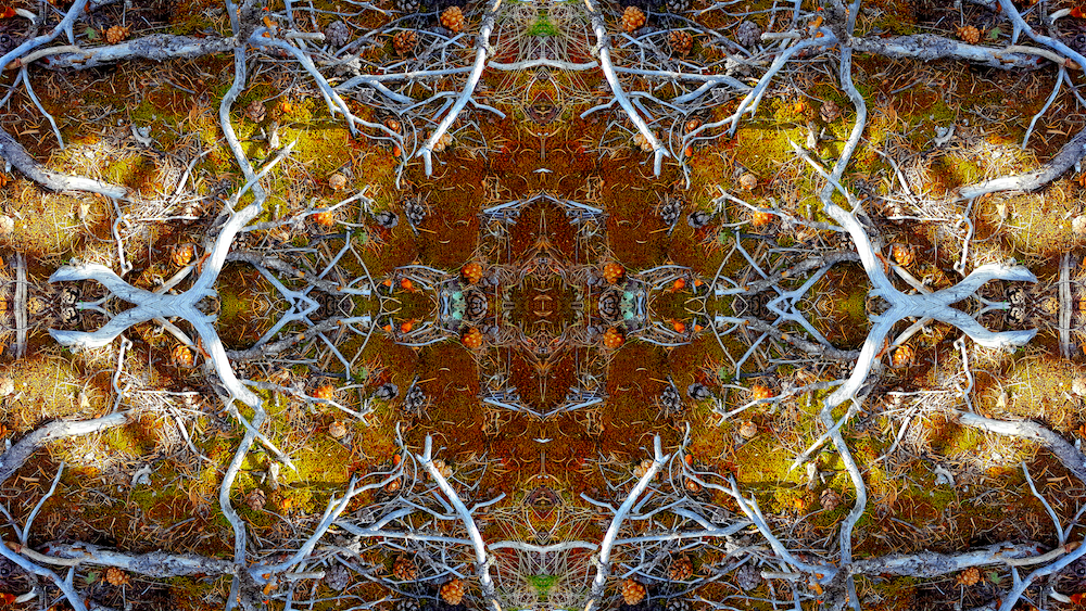 FOREST RUG 12A        © 2016 David Marlett