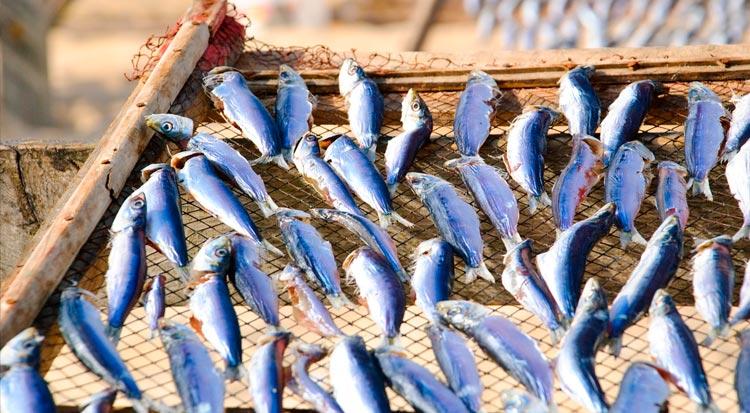 portugal_sardines