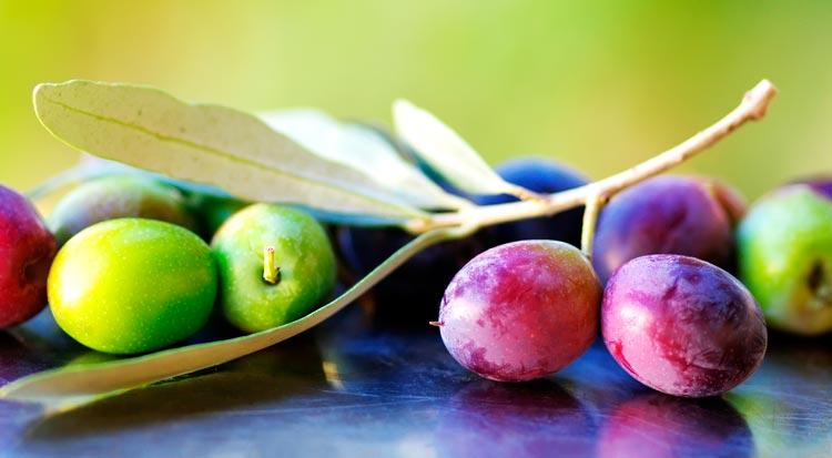 fresh_picked_olives