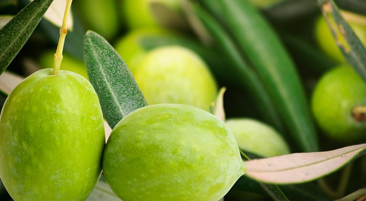 spain_green_olives
