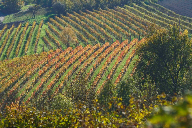 Autumn in 'The Langhe' Region of Northern Italy