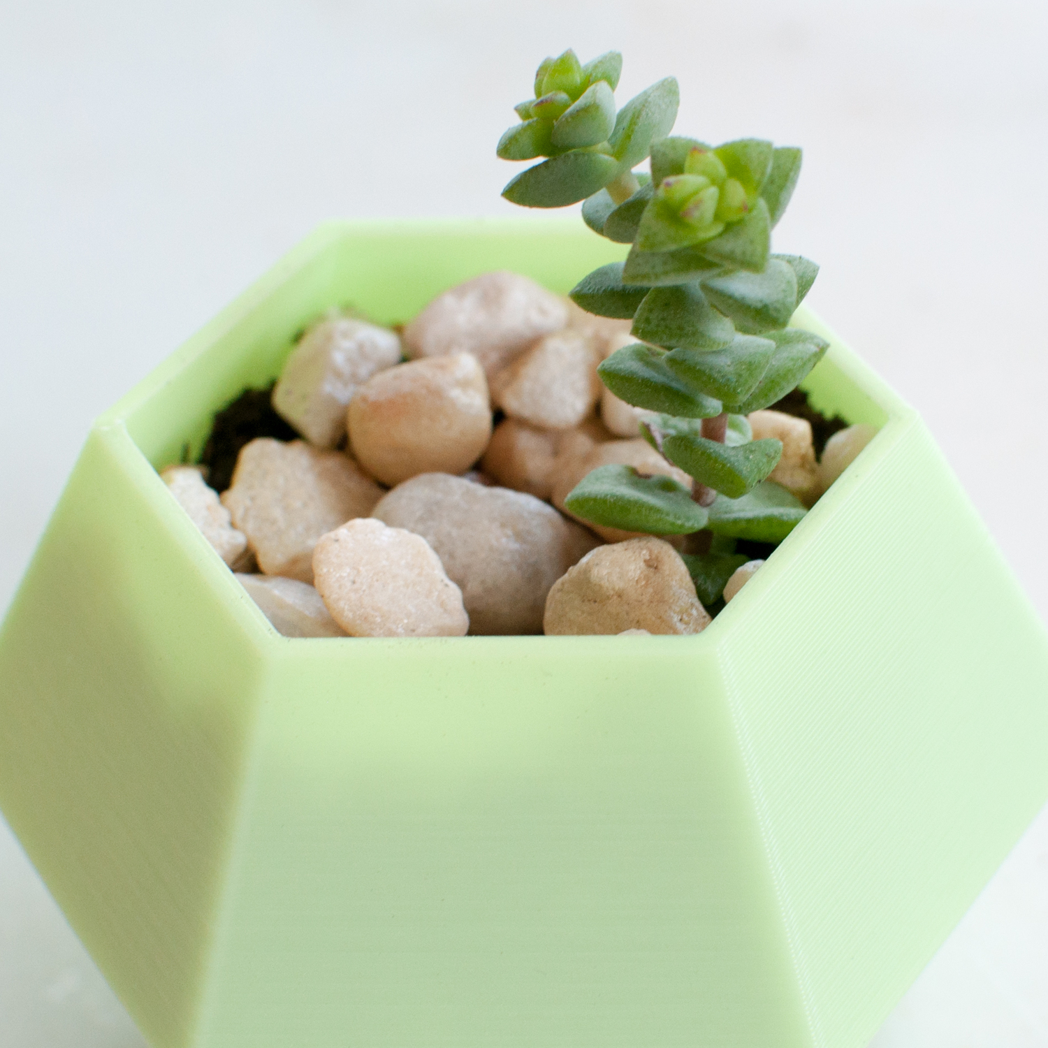 How To Grow Healthy Succulents The Easy Way Wearable Planter
