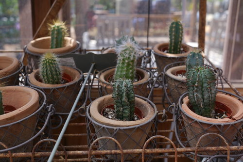 What To Avoid When Shopping For Succulents (And What To Buy Instead