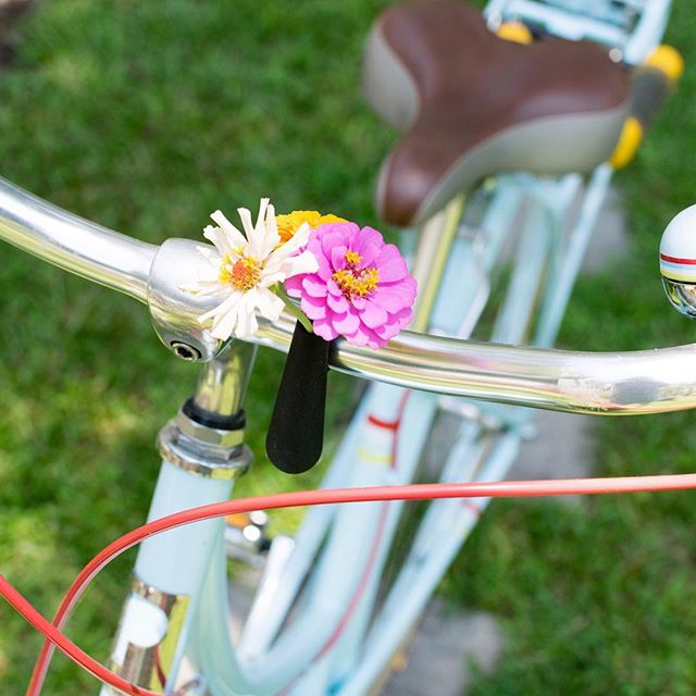 Put some of my home grown zinnias on my bike. I grew these to attract pollinators to my vegetable garden this summer, and I'm so happy with what a great cheerful addition to my summer they've been! #plantlady #cyclestyle #bikestyle #zinnias #plantsmakepeoplehappy #plantgoals #leafladies #botanicalpickmeup #urbanjunglebloggers #jungalowstyle #allthingsbotanical #plantladyisthenewcatlady