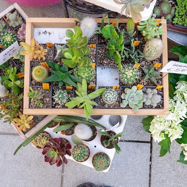 Found these fantastic succulents in Vienna, and I'm so sad that I can't bring them  on the plane home with me. If you're in Vienna go buy them at @blumenhauszumdom! #succulents #succulentgarden #leafladies #plantsmakepeoplehappy #plantlady #plantgoals #urbanjungle #urbanjunglebloggers #botanicalpickmeup #houseplantclub #allthingsbotanical #plantgang #plantladyisthenewcatlady #planthunter