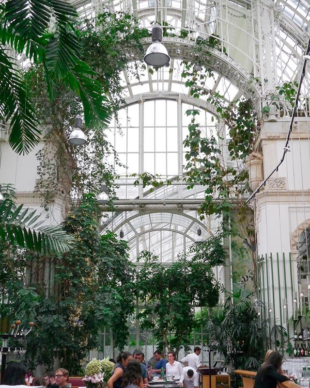Last week I spent a rainy afternoon eating lunch in a greenhouse and it was heavenly. #greenhouse #conservatory #conservatorygarden #botanicalpickmeup #greenhouse #plantlady #plantsmakepeoplehappy