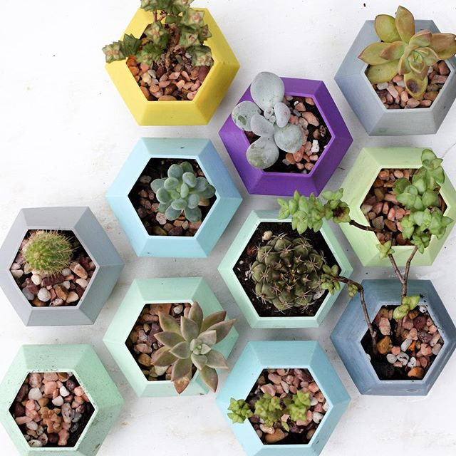 Getting my hands dirty and prepping my smallest outdoor succulents to come inside for the fall. What does everyone do for their larger plants? This is only about 20% of my plant family! (PS: if your plants need geometric homes for the winter, you can find this planter free to #3dprint on @thingiverse !) #plantlady #plantgang #plantsofinstagram #plantladyisthenewcatlady #leafladies #zone8b #zone8gardening #gardening #succulents