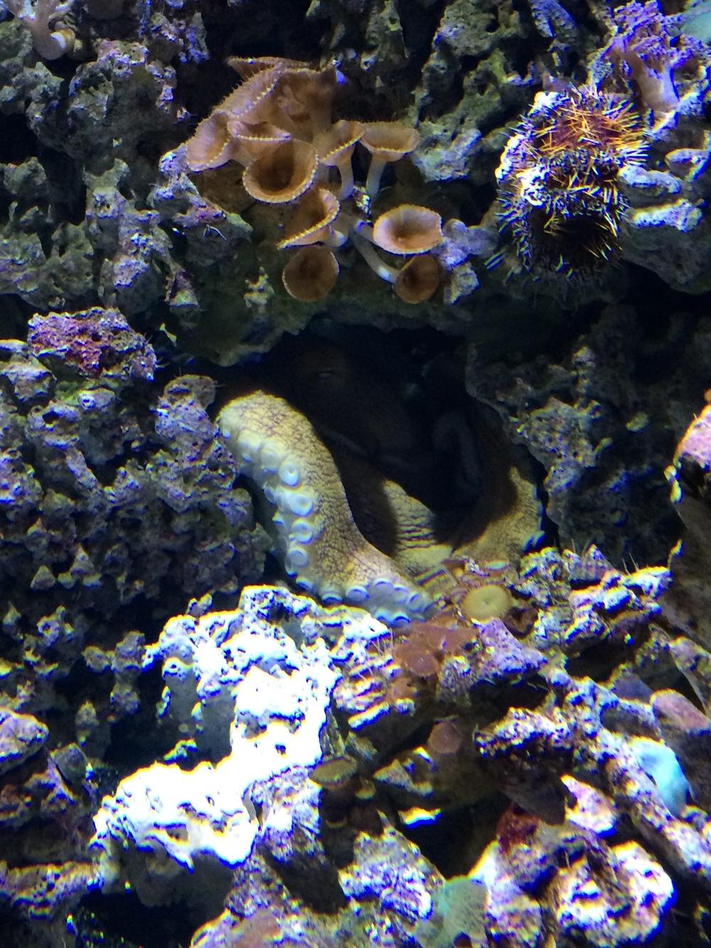 ocean-reef-animals.jpg