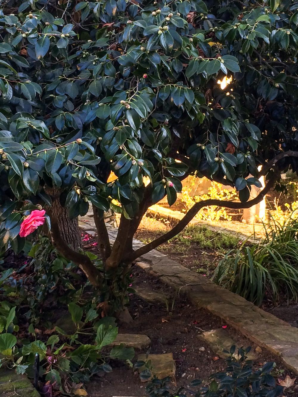 Gardens at Sunset Center in Carmel.