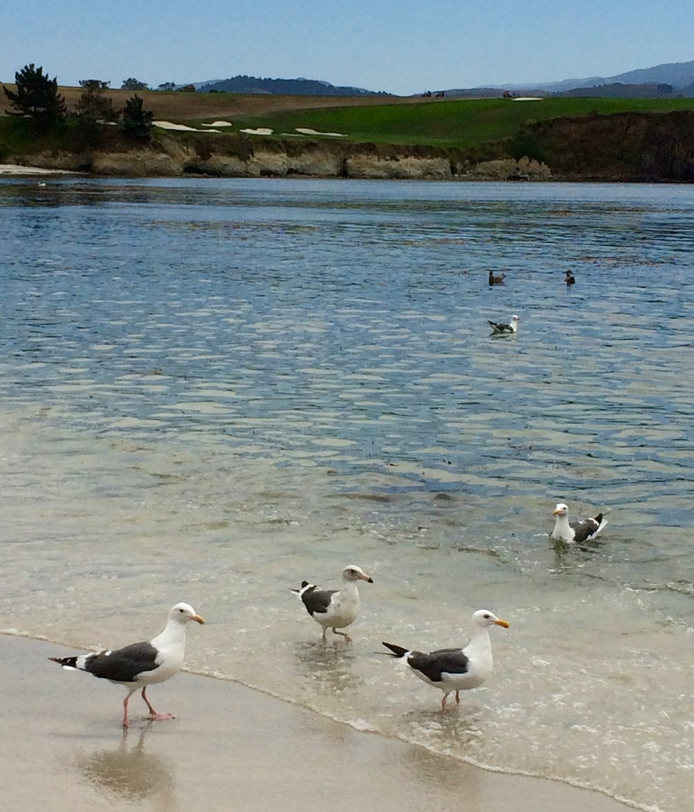 Seagulls enjoying the shore at Stillwater Cove.