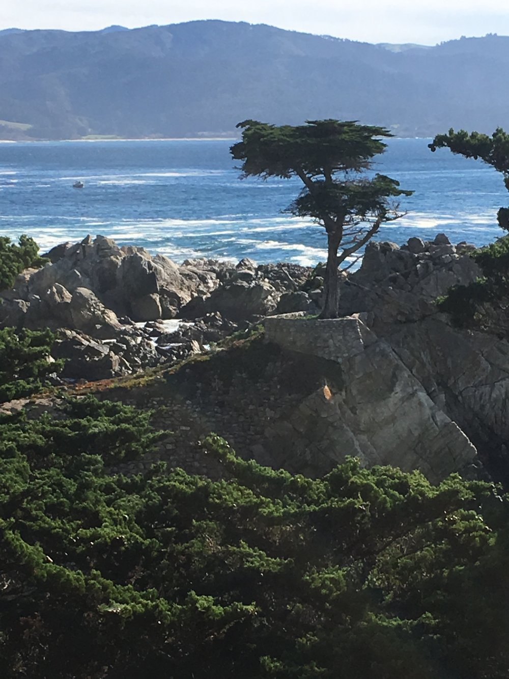 More Cypress trees along the coast.