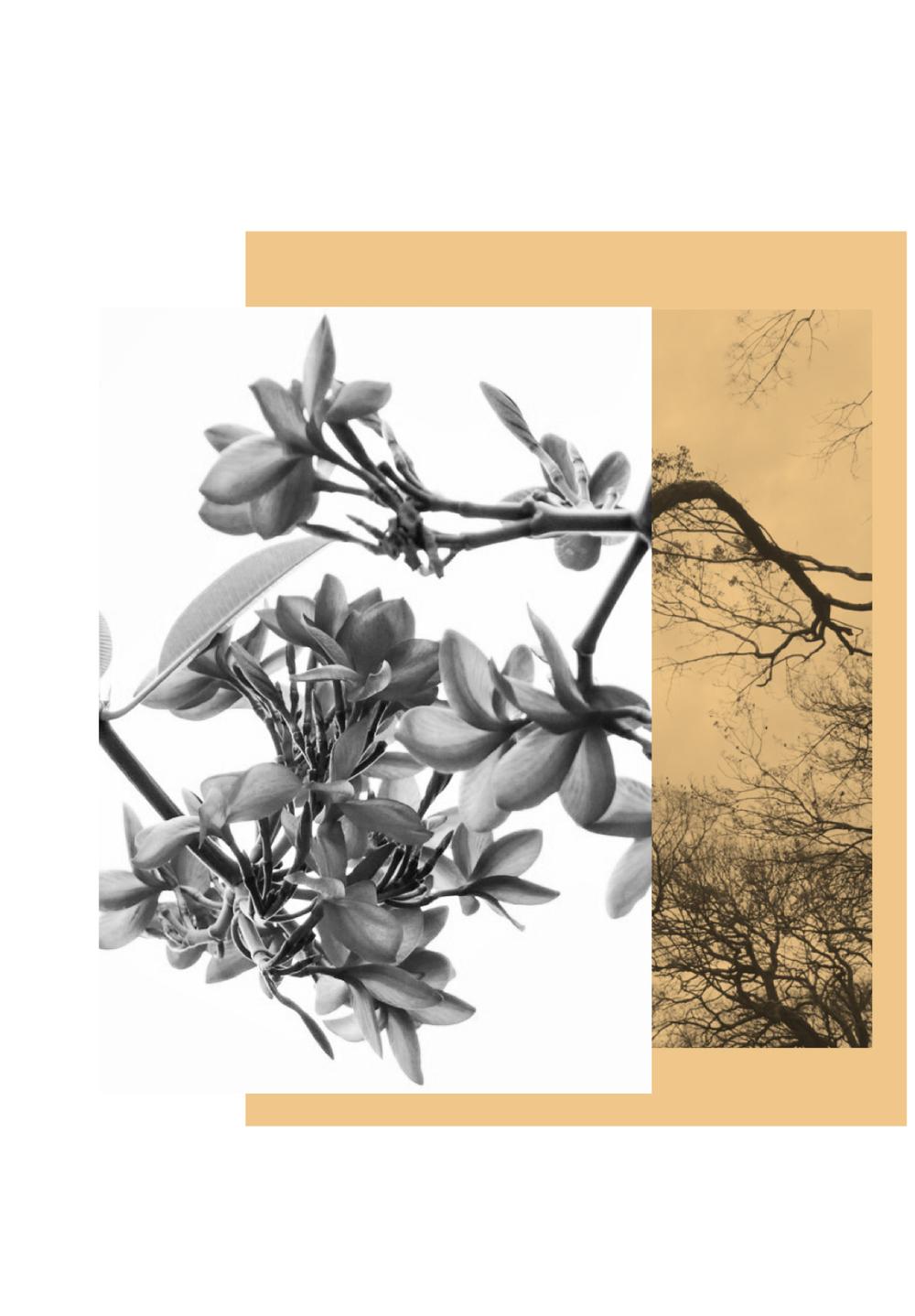 Remix Bim Treehouses.jpg