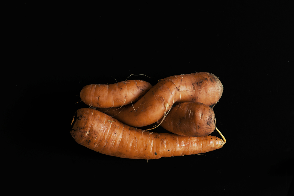 CarrotHug.jpg