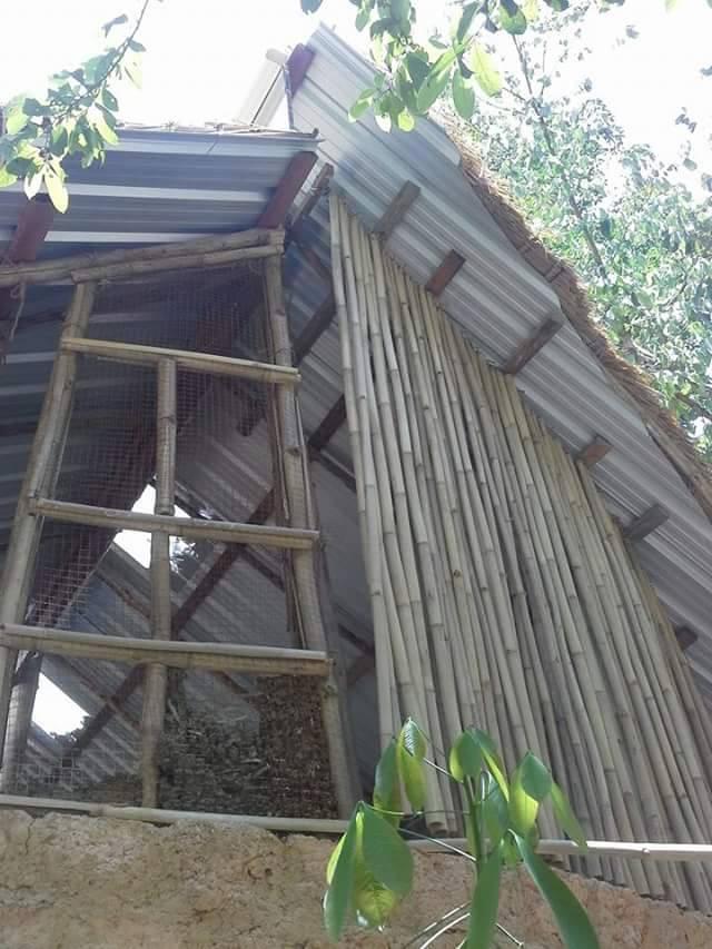 bamboo9.jpg
