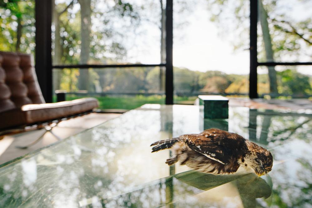 Jason Dodge,  A tourmaline and a ruby inside of an owl  (2007)