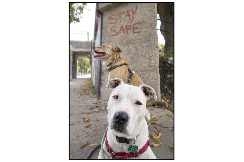 Mila Tig stay safe IMG_1145 SS.jpg