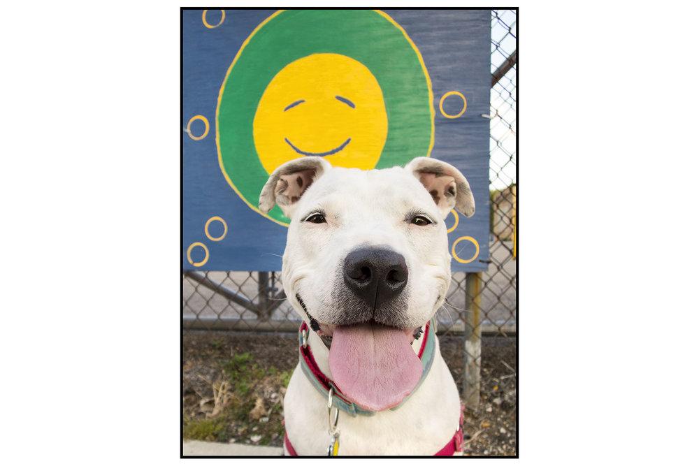 Mila smile board IMG_3443 brd.jpg