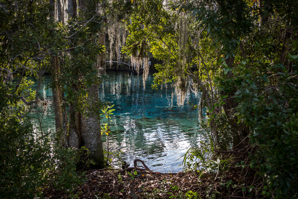We stopped at a natural fresh water spring on our way down central Florida. This is a hang out for manatees during colder temps, but we didn't get to see them that day. And yes, the water truly is that color! The place was magical.