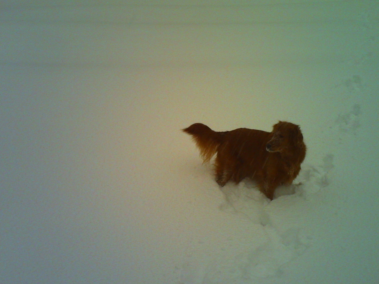 Got off early yesterday and went to play in the snow storm.