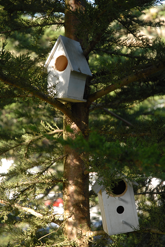 The inspiration for McDonald's birdhouses came from right outside her window at her home in Pacifica.  Photo © Aimee Santos