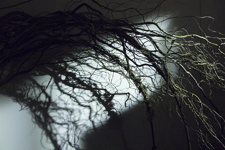 Remnants of branches cast a shadow from the night lights on her graduate studio walls at San Jose State University.  Photo © Aimee Santos