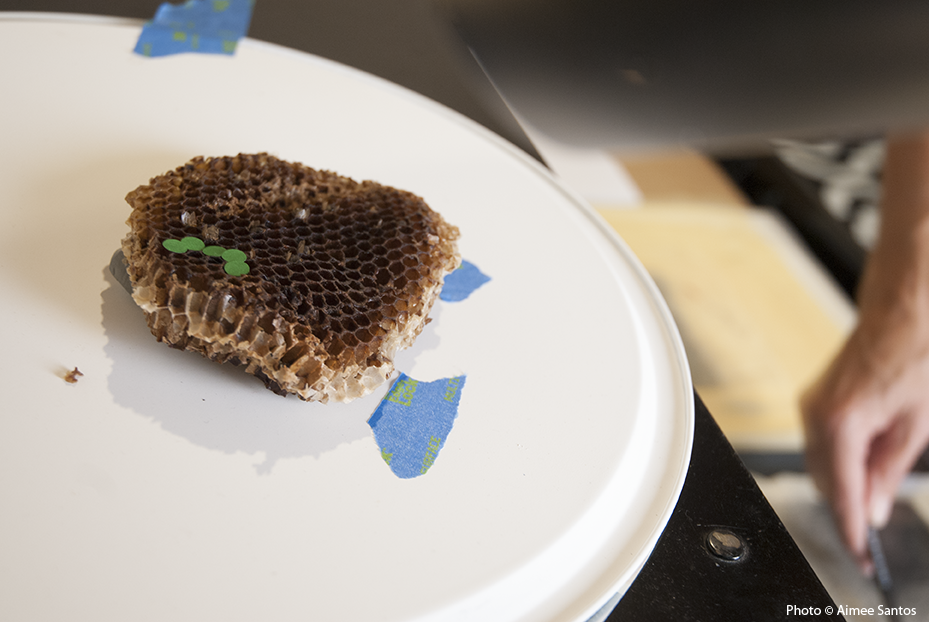 A rejected honeycomb lays on a plate in Arena's studio to give her inspiration for her work.  Photo © Aimee Santos