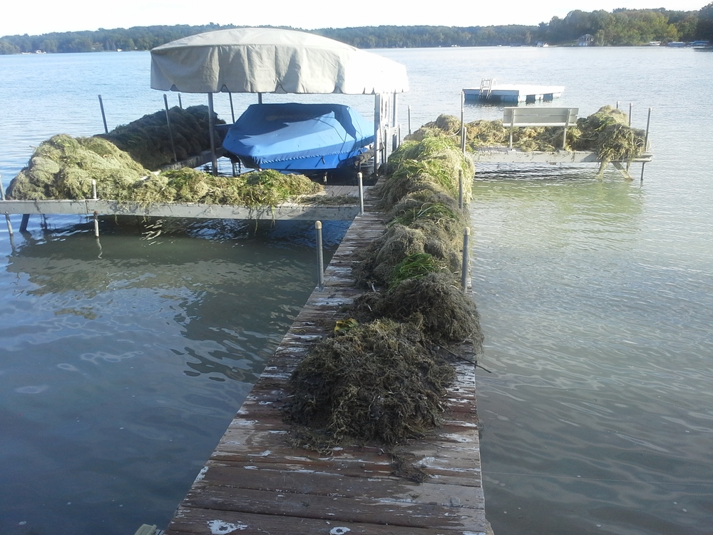 Lakeweed Removal