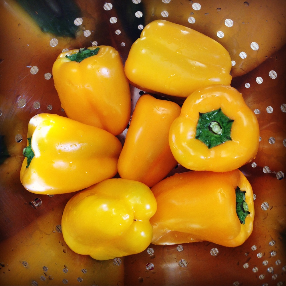 Yellow capsicums.JPG