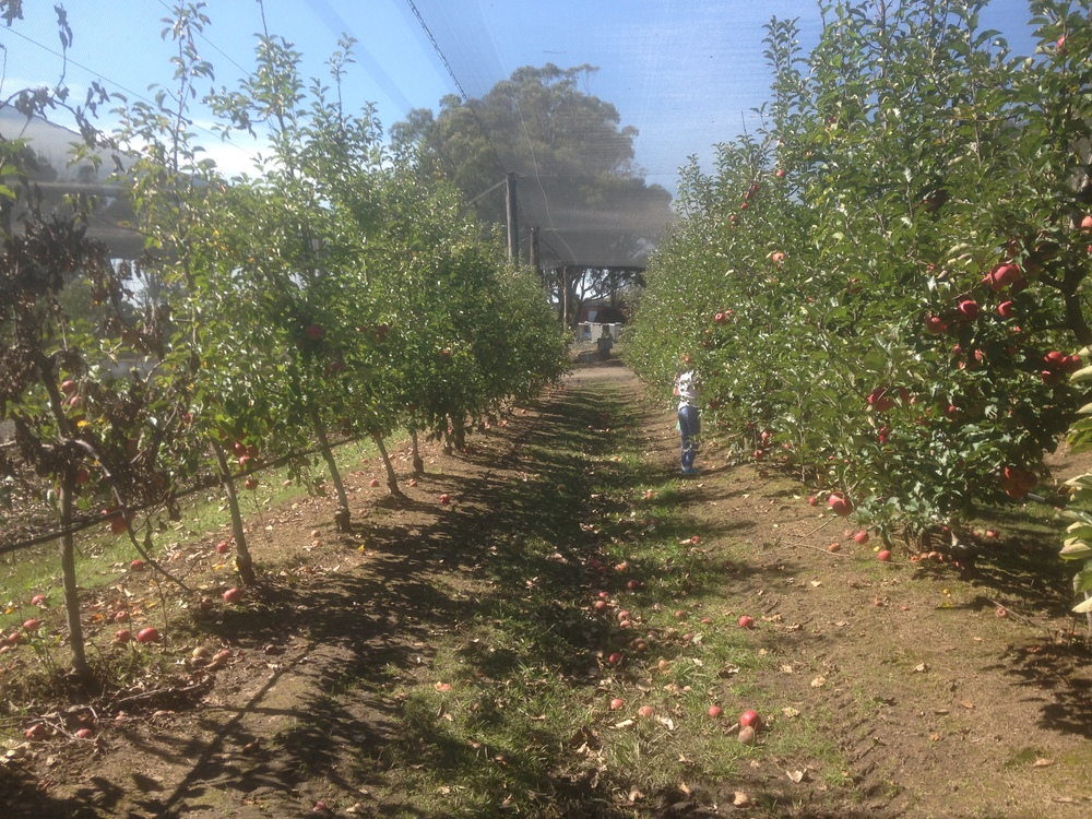 Glenbernie Apple Orchard