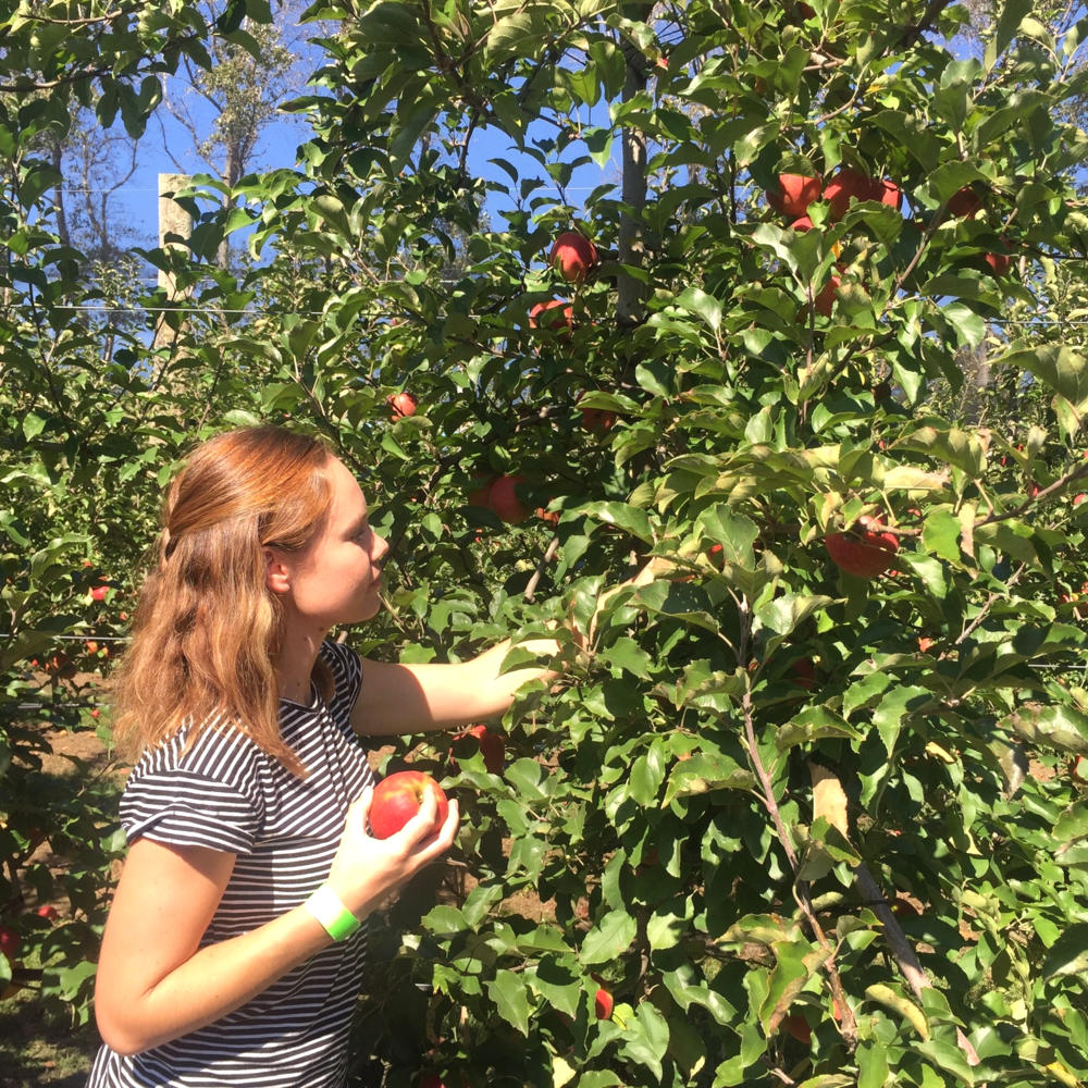 Jacqui picking apples