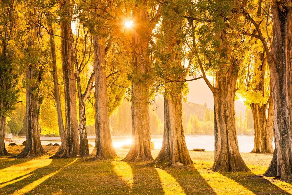 Wanaka Trees