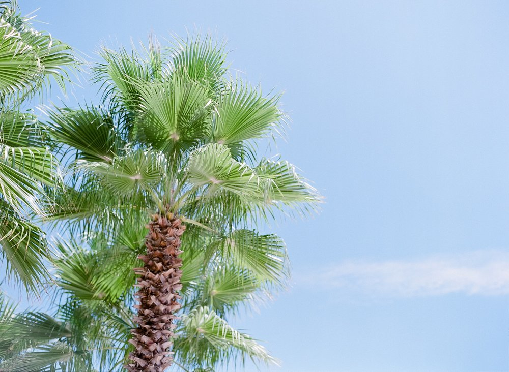 Jessie Barksdale Photography_florida destination wedding photographer_palm tree