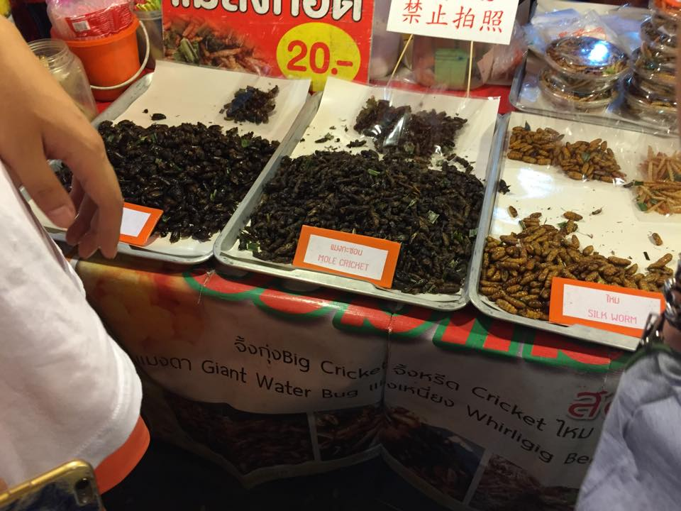 BUGS! At the Thai night market. Nobody dared to try them...