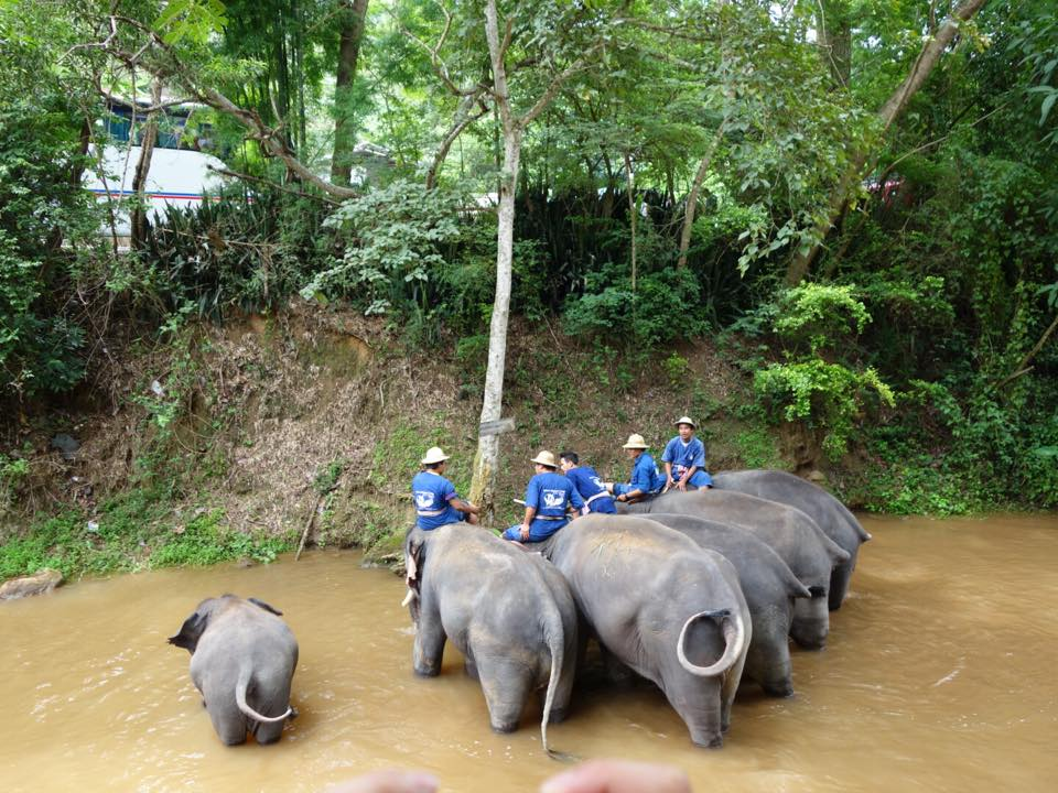 Maesa Elephant Camp!!