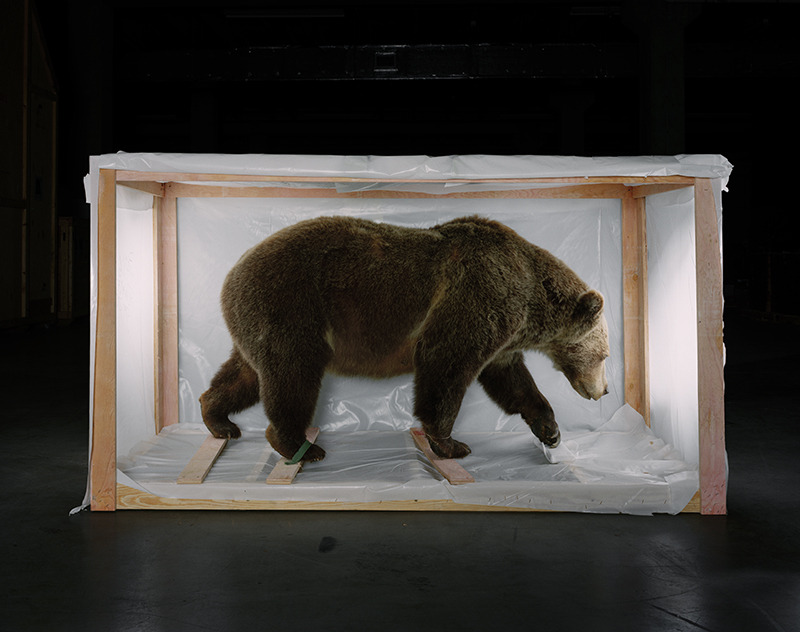 """Smithsonian Bear"" from the book and series Animal Logic , 2005 Archival digital ink jet print 40 x 50 inches"