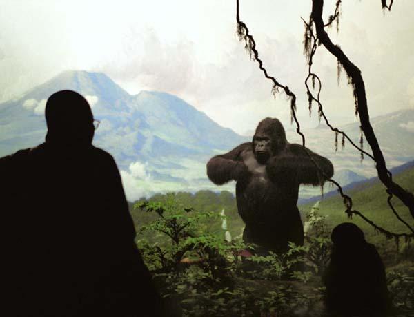 "Natural History I , 2004 C-print 20"" x 30"""