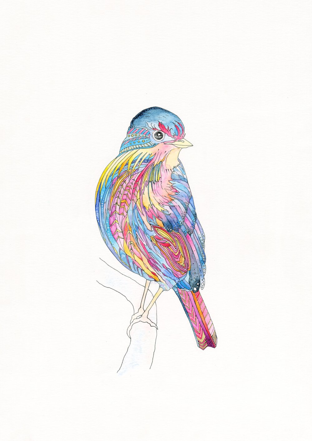Xucla Bird